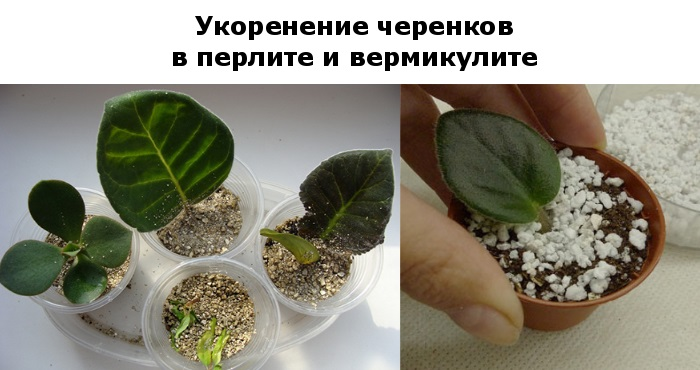 Перлит и вермикулит идеальны для укоренения отводков