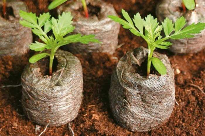 Аутдор гровинг - выращивание в открытом грунте для начинающих