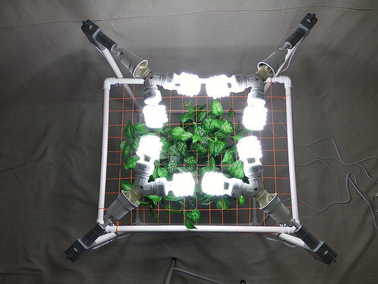 Тренировка растений методом ScrOG (Screen of Green)