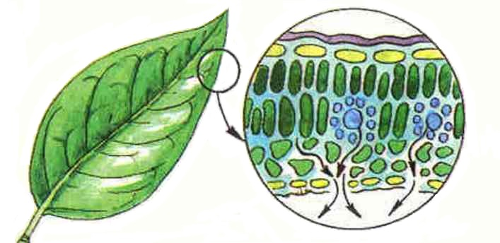 О пользе углекислого газа для растений