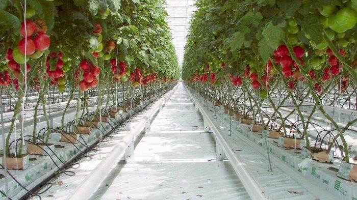 Сколько растений поместится в гроубоксе