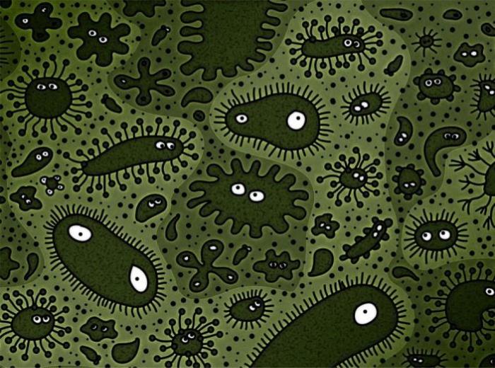 Микроорганизмы при использовании органических удобрений
