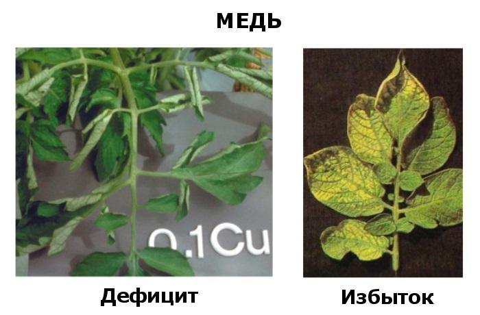 Медь в жизни растения - дефицит и избыток