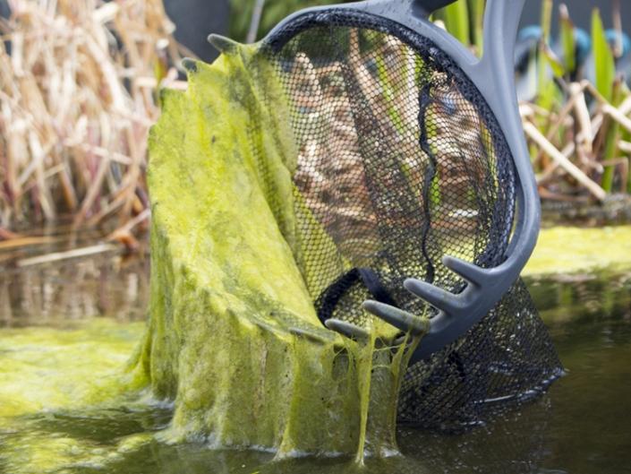 Сине-зеленые водоросли в гидропонике: как бороться? | Блог DzagiGrow