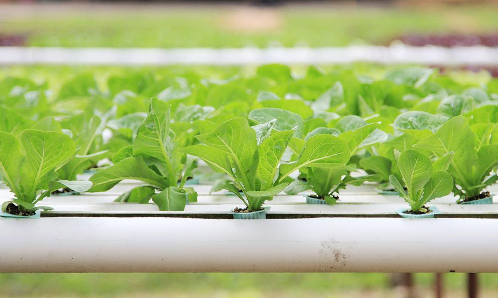 технология выращивания растений без почвы в воде