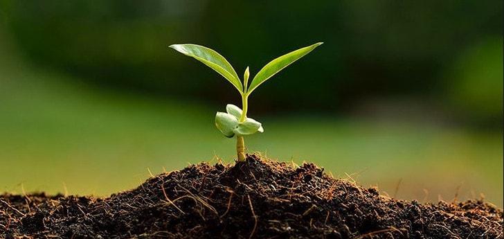 Почвенное выращивание растений