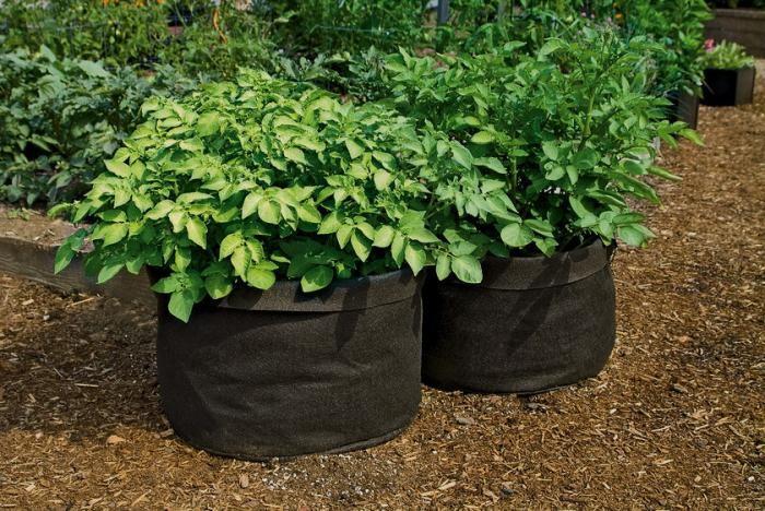 Умные горшки - лучший контейнер для растений