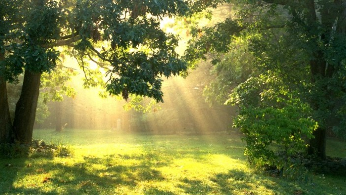 Выбор места для выращивания в аутдоре