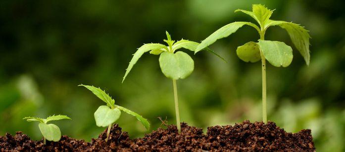 Картинки по запросу рост растений