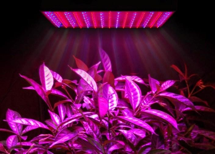 Картинки по запросу светодиодный светильник для растений  преимущества