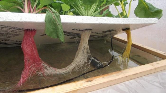 Удобство гидропоники в возможности следить за состоянием корневой системы