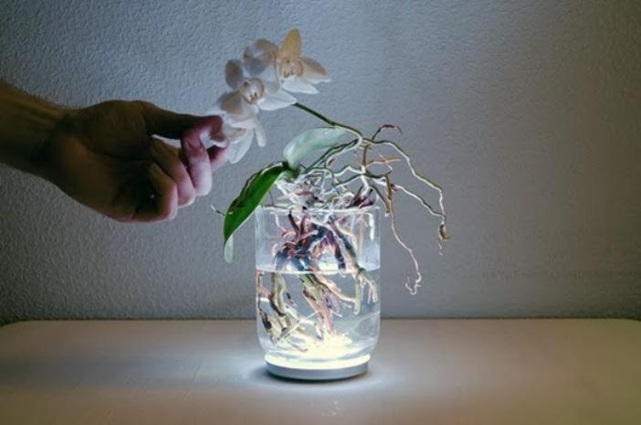 Растение питается в основном через корни