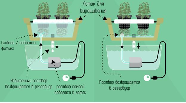 Разновидности гидропонных систем: периодическое затопление