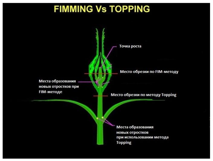 Методы подрезания растений - topping и FIM подрезка