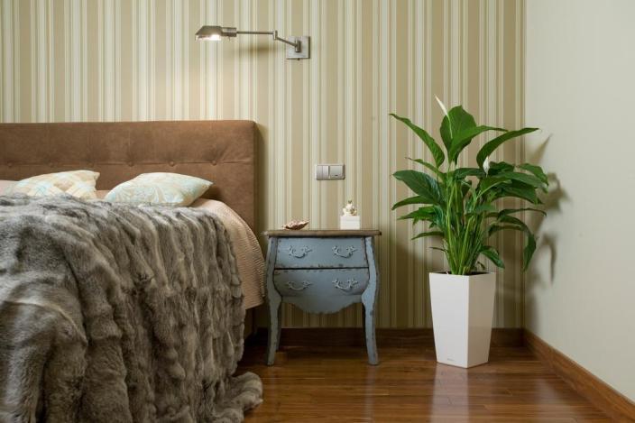 Комнатные растения влияют на здоровье человека