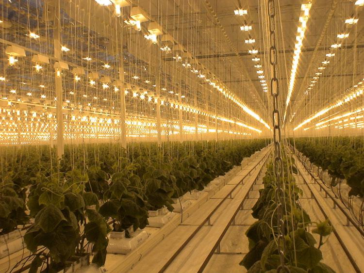 Искусственное освещение для растений в гроубоксе